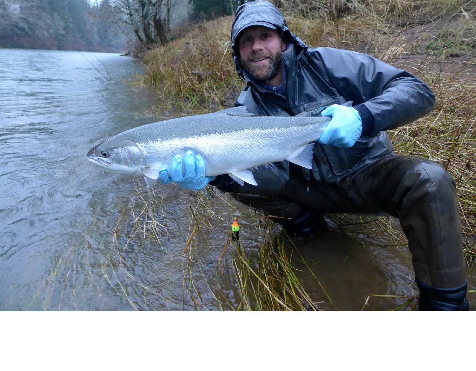 Oregon steelhead best fishing guides willamette valley for Oregon steelhead fishing