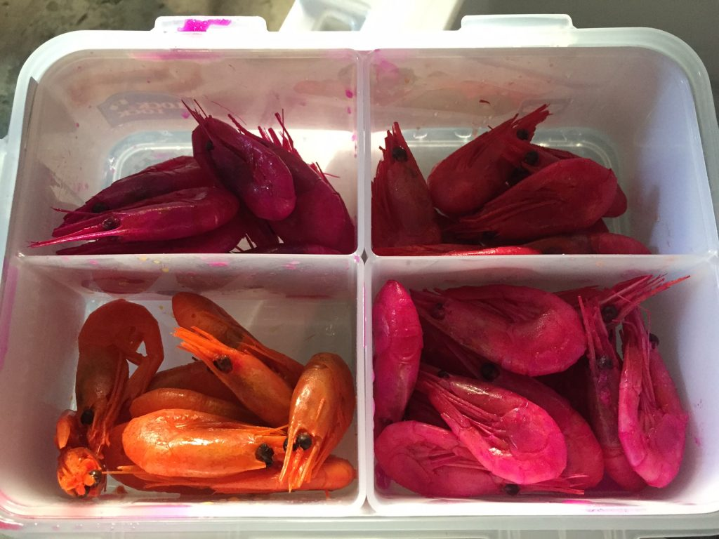 Prawns are now completely cured, set, and ready for action | Willamette Valley Outfitters