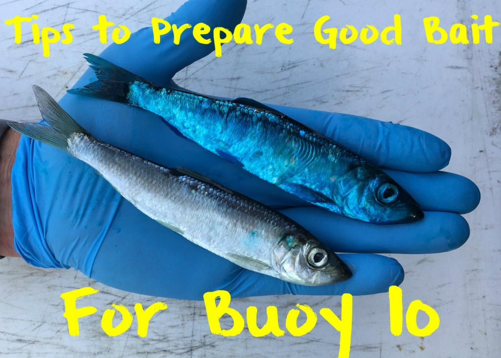 Check Out Our Great Tips for Good Buoy 10 Bait for Catching Kings. Call Willamette Valley Outfitters Today!