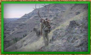 Best Oregon Hunting Guides | Bighorn Sheep Hunting | WVO